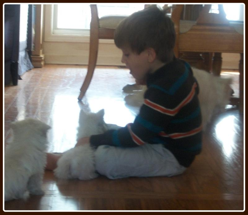 My grandson with the puppies