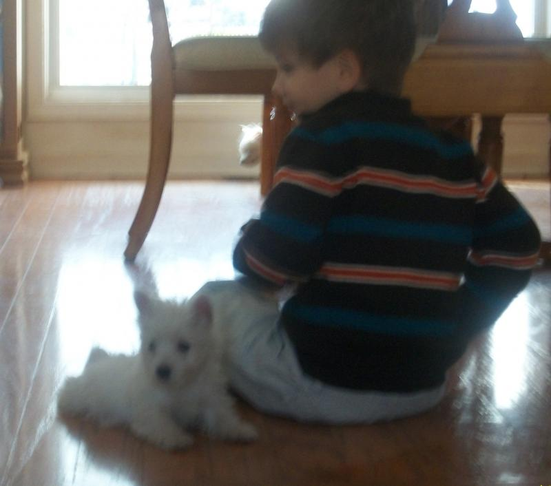Our Westies are great  with children