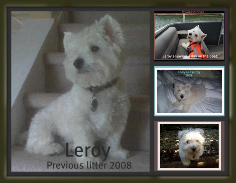 Leroy previous litter 2008