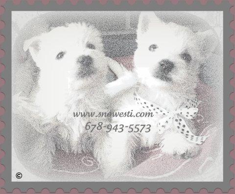 "A sketch of our beautiful westies ""snowesti"""